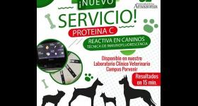 Nuevo servicio en Serología: Biomarcador Proteína C reactiva en caninos