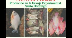 Venta de Pescado producido en la Granja Experimental Santo Domingo